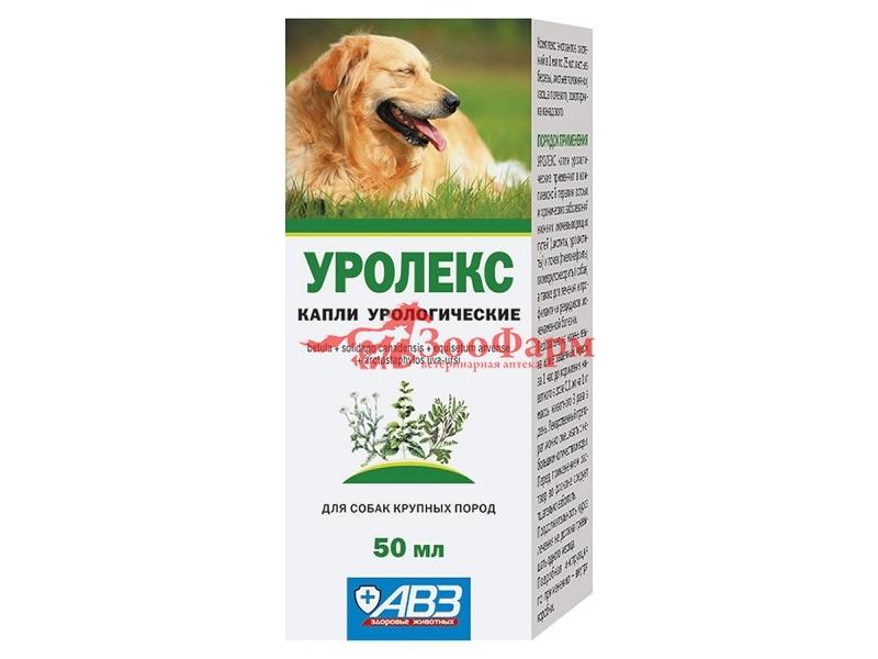 Лекарство от простатита у собак эффективные народные средства от простатита и аденомы простаты отзывы